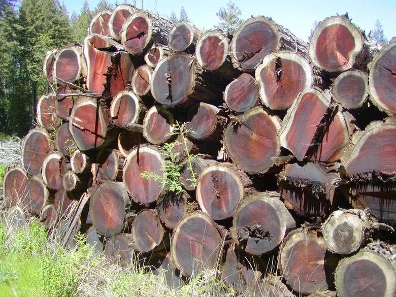David Smith Redwood Portable Sawmill Redwood Logs Ben Lomond